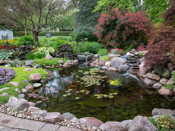 Beautiful koi pond with waterfall and spillway bowl
