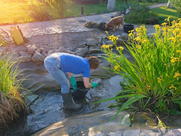 Woman cleaning solid waste from her drained pond bottom